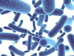 probiots